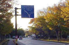 街路樹の紅葉2